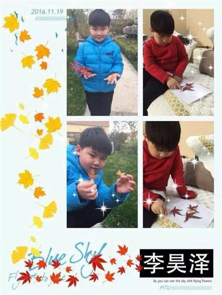 秋天的怀念 树叶贴画活动